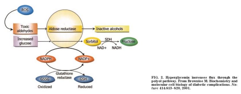 polyol-pathway